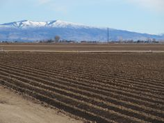 Idaho field...miss the smell of our Idaho dirt :)