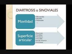 diartrosis - Cerca con Google