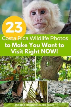 23 Costa Rica Wildlife Photos to Make You Want to Visit Right Now! Costa Rica is an animal lover's paradise. From monkeys to sloths, there's an animal no matter where you are! | #Travel #CostaRica |#CentralAmerica #Wildlife #Photography