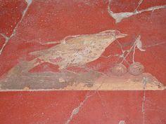 Les oiseaux - les merveilles d'Oplontis - la villa de Poppée