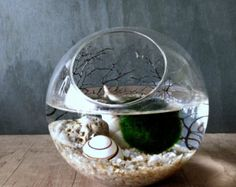Ecosphere Moss Ball Orb / Aquarium Moss Bowl Biosphere Kit