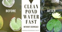 How to Clean Gross Murky Pond Water Fast—without Chemicals | Empress of Dirt