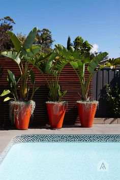 ✔ 25 suitable plants grow beside swimming pool 23 > Fieltro. Plants Around Pool, Pool Plants, Tropical Plants, Potted Plants, Tropical Gardens, Backyard Pool Landscaping, Tropical Landscaping, Patio, Landscaping Ideas