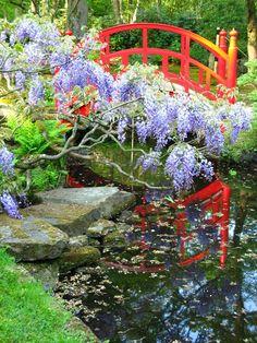 Japanse tuin met Japanse brug in Clingendael - wisteria