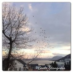 User: stangness Visit Norway, Photo Pin, Clouds, Celestial, Sunset, Photos, Outdoor, Instagram, Outdoors
