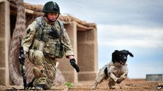 Lance Corporal Liam Tasker and Theo the dog who has been awarded a posthumous PDSA Dicken's award for bravery