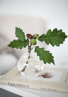 oak leaves + acorns