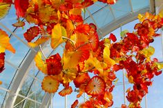 Dale Chihuly Gardens Seattle 2014
