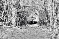 cueva de ramas by Veronica Photography on 500px