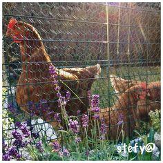 🐔🐔🐔 Horses, Animals, Animales, Animaux, Horse, Animal, Animais, Dieren