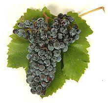 """Grappolo di Nero d'Avola.jpg Nero d'Avola ( pronúncia italiana: [nero Davola] ; """"Negro de Avola """"em italiano ) é """"o mais importante vinho tinto da uva na Sicília """" [ 1 ] e é uma das variedades indígenas mais importantes da Itália. É nomeado após Avola , no extremo sul da Sicília e os seus vinhos são comparados aos novos shirazes Mundo, com taninos doces e ameixa ou sabores apimentados. Contribui também para Marsala misturas. Fonte, Wikipédia."""