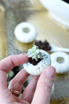 DIY Sea Urchin Succulent Planters- A lovely natural way to display your succulents is in sea urchin shells! Here is how to turn a bunch of empty shells into lovely DIY sea urchin succulent planters! This is such an easy craft, and the end result works great with beach themed decor!   indoor gardening, ways to decorate with succulents, #DIY #craft #succulent #beach