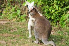 You're Going To Love Washington's Outback Kangaroo Farm