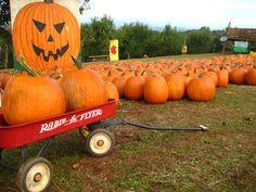 Carter Mountain Orchard - Charlottesville Charlottesville, Autumn, Fall, Virginia, Mountain, Spaces, Adventure, Nature, Naturaleza