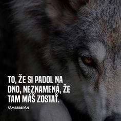 To, že jsi spadl na dno, neznamená, že tam máš zůstat. Motto, Story Quotes, True Words, Wolves, True Stories, Motivation, Videos, Funny, Instagram Posts