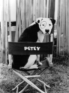 Petey ~ The Little Rascals (1994) ~ Behind the scenes
