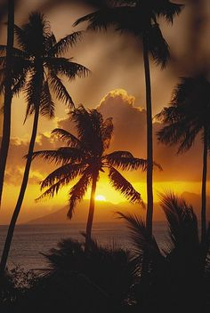 Below a selection of the most beautiful pictures from Tahiti. One of the most beautiful places on earth. Tahiti is the largest island in . Beautiful Sunset, Beautiful Beaches, Beautiful World, Places To Travel, Places To See, Nature Architecture, Foto Poster, Belle Photo, Vacation Spots