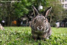 regalo-preciosos-conejos-enanos-de-angora-