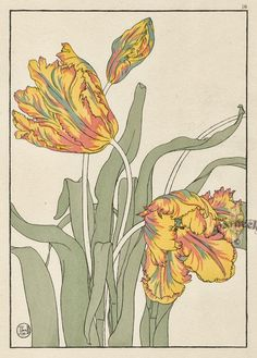 Jeannie Foord «Decorative Plant and Flower Studies: For the Use of Artists, Designers, Students and Others Flores Art Nouveau, Art Nouveau Flowers, Vintage Botanical Prints, Botanical Drawings, Botanical Flowers, Botanical Art, Art And Illustration, Art Floral, Garden Painting