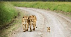 23 Photos Of Animals And Their Parents That Will Melt Your Heart.