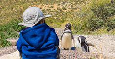 Visiting Penguins in Punta Tombo #Argentina with Kids - via  @wanderingwagars #travel https://www.wanderingwagars.com/punta-tombo-argentina-penguins/?utm_campaign=crowdfire&utm_content=crowdfire&utm_medium=social&utm_source=pinterest