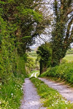 Country lane (Ireland) by Imen McDonnell cr.c.