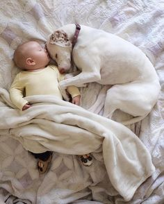 Meet the adorably inseparable duo of Nora the dog and baby 11-month-old Archie. Nora, the 8-year-old English pointer came from an abusive background and is afraid of almost everything.