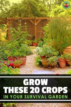 When times get rough you can turn to your survival garden to provide food for your family Here s 20 of the best crops to grow to live on # Urban Survival, Homestead Survival, Wilderness Survival, Survival Life Hacks, Survival Prepping, Emergency Preparation, Survival Quotes, Survival Gear, Primitive Survival