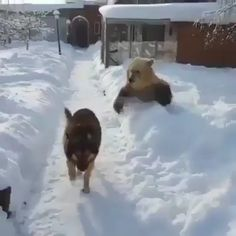 Beautiful - Sophia - Beautiful On a scale of how exceptionally beautiful is this video - Cute Funny Animals, Cute Baby Animals, Animals And Pets, Funny Dog Videos, Funny Dogs, Cute Dogs, Cute Animal Videos, Funny Animal Pictures, Tier Fotos