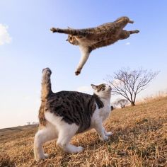 Flying attack....