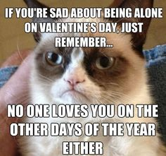 Valentine's Day - Grumpy Cat Reveals a Bitter-Sweet Reality. Thanks Grumpy Cat Grumpy Cat Quotes, Funny Grumpy Cat Memes, Funny Animal Memes, Funny Quotes, Funny Memes, Grumpy Kitty, Grumpy Car, Grumpy Cat Disney, Angry Cat Memes