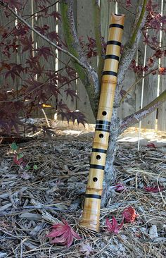 Wow!Here's a beautiful framer!-Shakuhachi(shah koo hah chee) under the Japanese maple;))  Note:The Japanese musical instruments including the Koto (japanese harp), Shakuhachi (bamboo flute) and Shamisen (japanese mandolin)