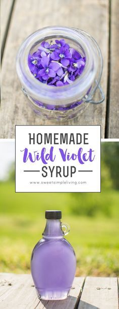 Homemade Wild Violet Syrup - What bitter simples could be added to this to make an even better delight? Homemade Syrup, Wild Edibles, Kitchen Witch, Edible Flowers, Canning Recipes, Simple Syrup, Herbal Remedies, Simple Living, Smoothie