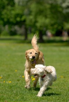 Take your pooch to Dogwood Park! Let Fido run free among 15+ acres of off-leash park!