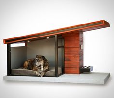Guinness lounges on a specially crafted waterproof dog bed, which comes with the MDK9, mid-century-modern house.