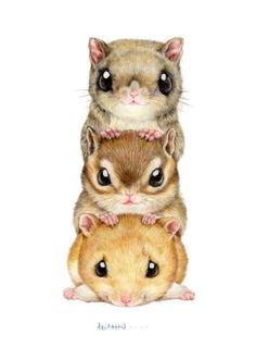 Rodentia tower squirrel,flying squirrel,humster