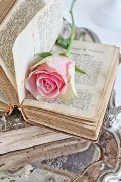 Pink rose and vintage book