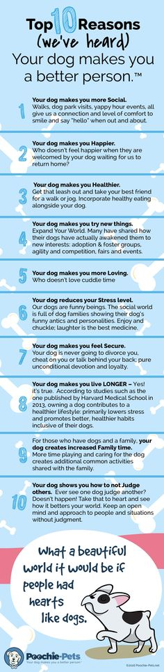 Top 10 Reasons; Your Dog Makes You A Better Person