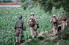 Opium production in Afghanistan has been on the rise since U.S. occupation started in 2001.