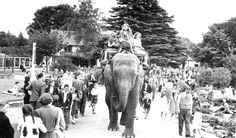 Sarah the elephant in Dublin Zoo 1959 Dublin Zoo, Dublin City, Republic Of Ireland, The Republic, Old Photos, Vintage Photos, Molly Malone, Best Memories, Childhood Memories