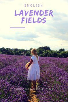 Mayfield Lavender Fields just outside of London