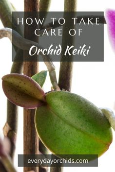 Orchid Plant Care, Orchid Plants, All Plants, Orchids, Baby Orchid, House Plant Care, Mother Plant, Replant, Propagation