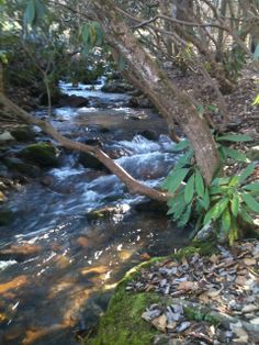 89 Best Smoky Mountain Falls Cabin Rentals In The Great