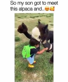Cute Little Animals, Cute Funny Animals, Funny Cute, Cute Dogs, Cute Babies, Animal Jokes, Funny Animal Memes, Cute Animal Videos, Cute Animal Pictures