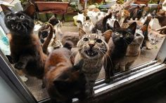 On Japan's Tashirojima Island, cats are king