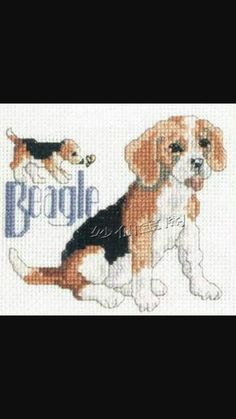Perro beagle 3