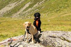 "Blogparade ""Macht Wandern glücklich?"" Labrador Retriever, Dogs, Animals, Hiking, Labrador Retrievers, Animales, Animaux, Pet Dogs, Doggies"
