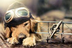 Aviones Ahora podría llevar su mascota en la cabina de el avión si no pesa más de 8 kg. (Incluyendo su jaula o paquete) con autorización previa de la oficina de la reserva. Algunas mascotas pueden viajar en la cabina de el avión con usted, si se obtiene la autorización …