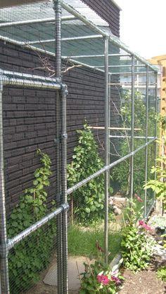 Konijnenverblijf van steigerbuis en koppelingen Pipes, Outdoor Structures, Madness, Gardening, Diy, Gardens, Manualidades, Green Houses, Backyard Farming