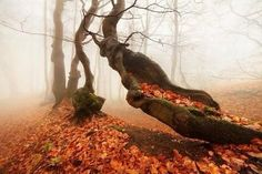 Uploaded by FX. Find images and videos about photography, nature and autumn on We Heart It - the app to get lost in what you love. Artist Canvas, Canvas Art, Enchanted, Autumn Forest, Forest Light, Magic Forest, Autumn Trees, Autumn Leaves, Ciel
